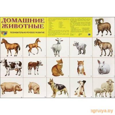 Плакат А2 «Домашние животные», ТЦ СФЕРА от ТЦ СФЕРА в Минске фото
