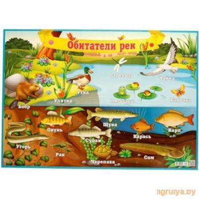 Плакат А2 «Обитатели рек», Русский дизайн от Русский дизайн в Минске фото
