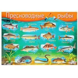 Плакат А2 «Пресноводные рыбы», Русский дизайн
