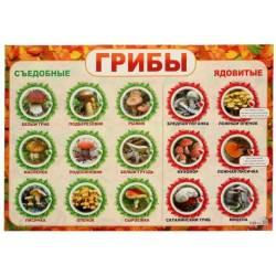 Плакат А2 «Грибы», Русский дизайн