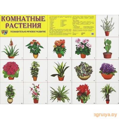 Плакат А2 «Комнатные растения», ТЦ СФЕРА от ТЦ СФЕРА в Минске фото
