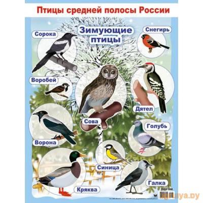 Плакат А2 «Зимующие птицы», Оля и Женя от Оля и Женя в Минске фото
